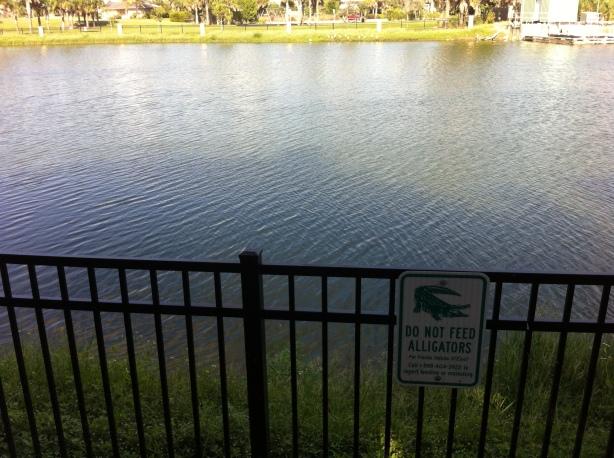 gator lake 068